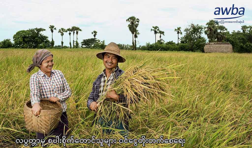 Myanma Awba Group Mercy Corps Golden Sunland Labutta paddy farmers